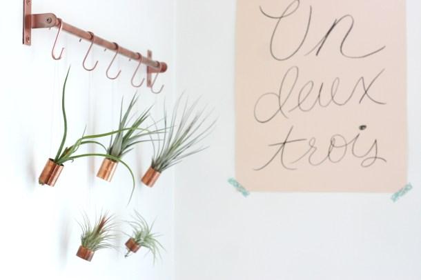 Hanging Air Plants   Gathered Cheer