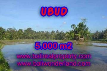 Land for sale in Ubud Bali, Unbelievable view in Ubud Payangan – TJUB413
