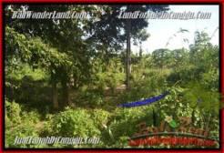 Beautiful LAND IN Canggu Pererenan BALI FOR SALE TJCG181
