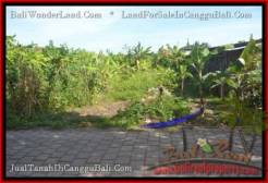Affordable LAND SALE IN Canggu Pererenan TJCG182