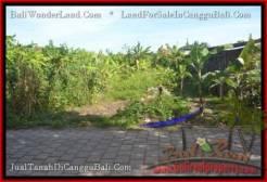 Affordable LAND SALE IN Canggu Pererenan TJCG182