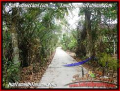 Magnificent PROPERTY Tabanan Selemadeg 8,000 m2 LAND FOR SALE TJTB161