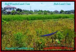 Affordable PROPERTY Canggu Pererenan BALI LAND FOR SALE TJCG191