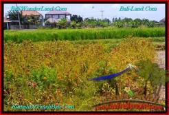 200 m2 LAND FOR SALE IN CANGGU TJCG191