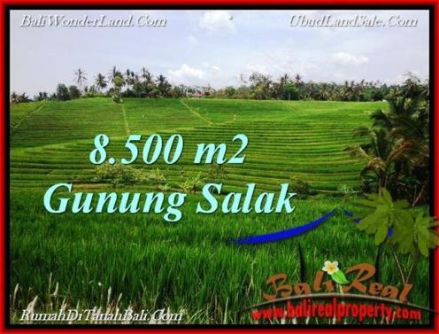 Beautiful 8,500 m2 LAND FOR SALE IN Tabanan Selemadeg TJTB223