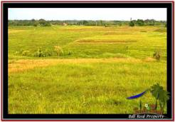 FOR SALE Magnificent PROPERTY LAND IN TABANAN TJTB250