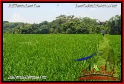 Affordable PROPERTY 2,940 m2 LAND FOR SALE IN Tabanan Selemadeg TJTB265