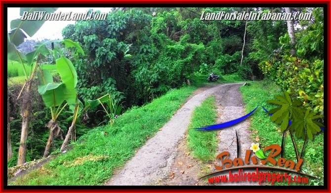 Beautiful PROPERTY LAND FOR SALE IN TABANAN BALI TJTB280