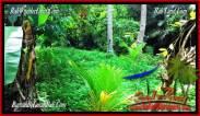 Affordable 3,150 m2 LAND SALE IN TABANAN BALI TJTB282