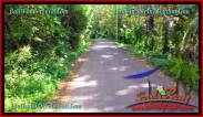 Magnificent PROPERTY LAND FOR SALE IN TABANAN TJTB275