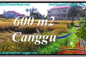 Beautiful PROPERTY 600 m2 LAND FOR SALE IN CANGGU BALI TJCG211