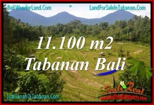 Affordable PROPERTY 11,100 m2 LAND IN Tabanan Penebel BALI FOR SALE TJTB320