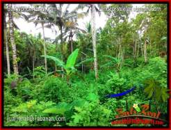 Magnificent PROPERTY LAND IN Tabanan Penebel BALI FOR SALE TJTB322