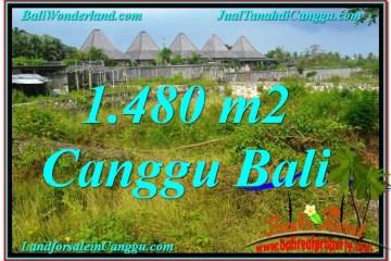 Beautiful PROPERTY 1,480 m2 LAND FOR SALE IN CANGGU BALI TJCG212