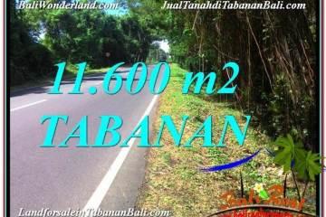 FOR SALE Exotic 11,600 m2 LAND IN Tabanan Selemadeg BALI TJTB327