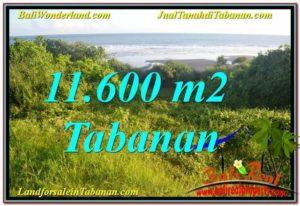 Affordable 11,600 m2 LAND FOR SALE IN Tabanan Selemadeg TJTB340
