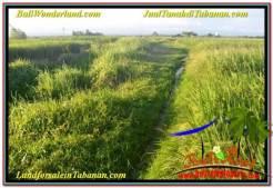 Affordable PROPERTY 11,600 m2 LAND SALE IN Tabanan Selemadeg TJTB340