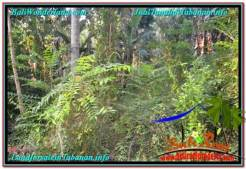 Exotic 13,855 m2 LAND FOR SALE IN Tabanan Selemadeg TJTB335