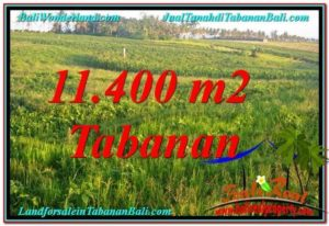 Exotic LAND SALE IN Tabanan Selemadeg TJTB339