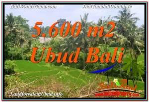 Magnificent LAND SALE IN Sentral / Ubud Center BALI TJUB636
