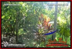 FOR SALE Exotic PROPERTY 10,100 m2 LAND IN Tabanan Selemadeg Barat TJTB360