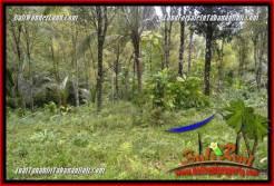 Beautiful LAND FOR SALE IN Tabanan Selemadeg Timur BALI TJTB364