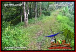 Beautiful PROPERTY 20,000 m2 LAND IN Tabanan Selemadeg Timur BALI FOR SALE TJTB365