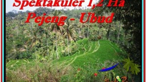 Beautiful PROPERTY LAND SALE IN UBUD TJUB520