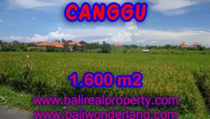 Beautiful Property for sale in Bali, land for sale in Canggu  – TJCG139