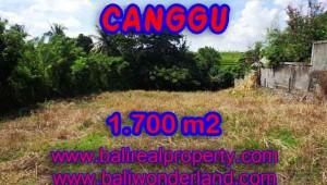 Property sale in Bali, Beautiful land in Canggu for sale – TJCG143
