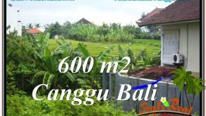 Magnificent PROPERTY 600 m2 LAND IN CANGGU BALI FOR SALE TJCG206