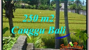 Exotic PROPERTY 250 m2 LAND FOR SALE IN CANGGU BALI TJCG207