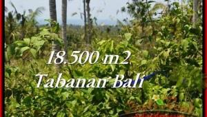 Exotic PROPERTY LAND IN TABANAN FOR SALE TJTB232