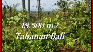 Exotic PROPERTY LAND IN TABANAN FOR SALE TJTB232