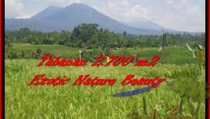 Exotic LAND IN Tabanan Penebel BALI FOR SALE TJTB175