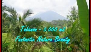 Exotic 6.000 m2 LAND SALE IN TABANAN TJTB182