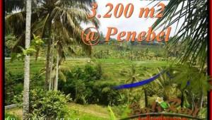 LAND IN Tabanan Jatiluwih BALI FOR SALE TJTB216