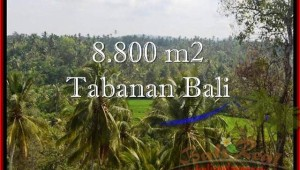 Magnificent PROPERTY 8,800 m2 LAND FOR SALE IN Tabanan Selemadeg TJTB238
