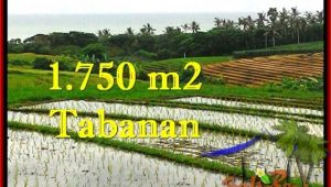 Magnificent 1,775 m2 LAND IN TABANAN BALI FOR SALE TJTB264