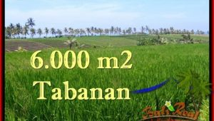 FOR SALE Exotic PROPERTY 6,000 m2 LAND IN TABANAN BALI TJTB267