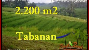 Beautiful PROPERTY 2,200 m2 LAND IN Tabanan Selemadeg FOR SALE TJTB269
