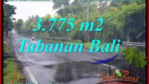 3,775 m2 LAND SALE IN TABANAN TJTB271