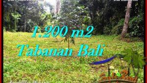 Exotic PROPERTY 1,200 m2 LAND SALE IN TABANAN BALI TJTB278