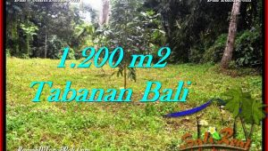 Exotic PROPERTY 1,200 m2 LAND SALE IN TABANAN BALI TJTB278