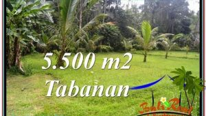 5,500 m2 LAND SALE IN TABANAN TJTB295
