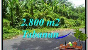 Magnificent LAND SALE IN Tabanan Kerambitan BALI TJTB300