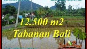 FOR SALE Magnificent 12,500 m2 LAND IN Tabanan Penebel BALI TJTB317