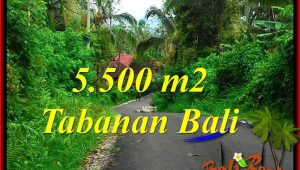 Magnificent 5,500 m2 LAND IN Tabanan Penebel FOR SALE TJTB323