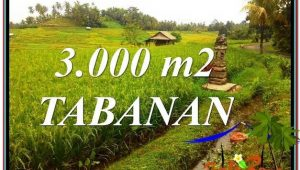 FOR SALE Beautiful PROPERTY 3,000 m2 LAND IN Tabanan Selemadeg TJTB328