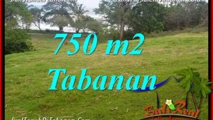 FOR SALE Affordable PROPERTY 750 m2 LAND IN TABANAN BALI TJTB346